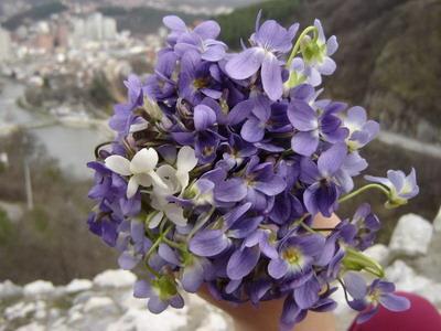 ljubicice Pokloni mi cvet i znaću šta misliš o meni