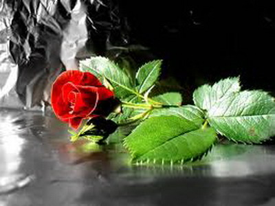 ruza Pokloni mi cvet i znaću šta misliš o meni