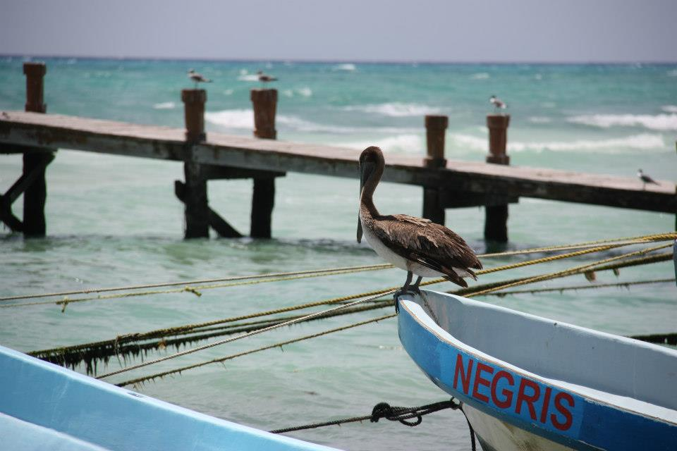 68548 10151632836127517 669317519 n Manga Trip: Meksiko, raj na Karibima