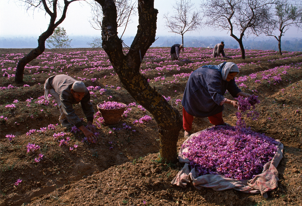 opr0p2su Steve McCurry   mag fotografije