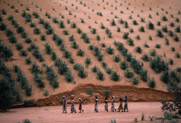 opr0p38j Steve McCurry   mag fotografije