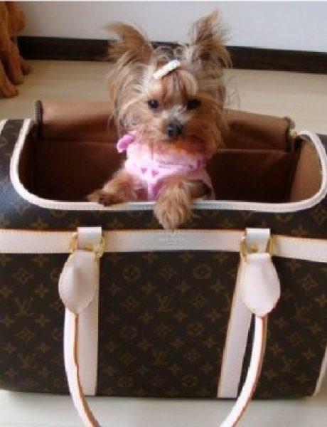 Došlo doba da i pas Louis Vuitton proba…