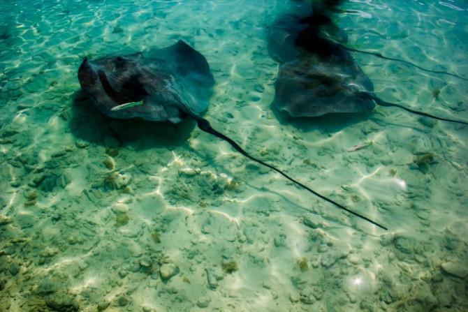 bora bora2 Bora Bora: raj je ipak na Zemlji