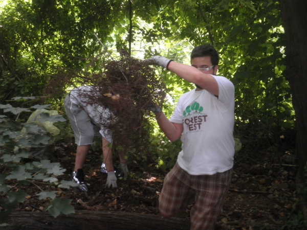 P6041100 picnik Forest Fest