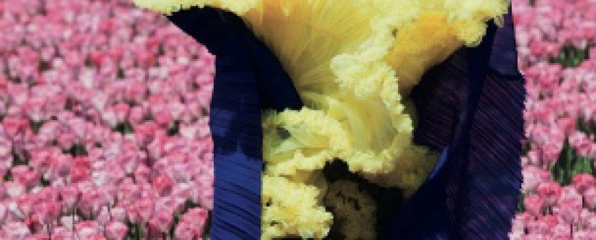 """Lisanne de Jong za """"Dazed & Confused"""" jul 2011."""
