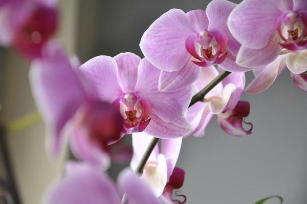 orhidee Lepota je dar prirode