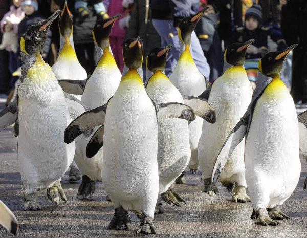 Basel Zoo Najbolji zoo vrtovi sveta