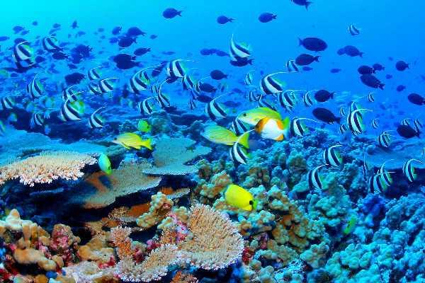 Great Barrier Reef Biodiversity Mesta koja neće postojati u sledećem veku