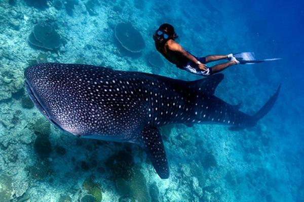 Thingstodo Maldives Scubadiving l Maldivi   koralne oči okeana