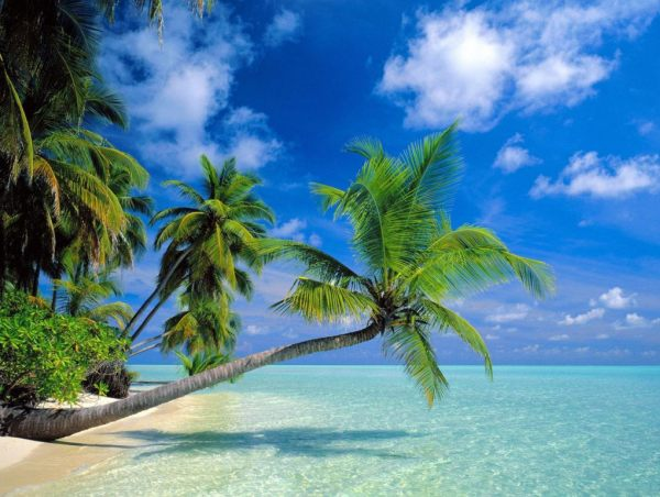 maldive 1024x768 Maldivi   koralne oči okeana