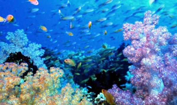 maldivi Maldivi   koralne oči okeana
