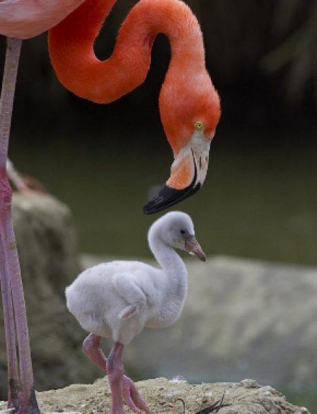 Najbolji zoo vrtovi sveta