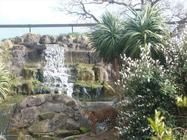 picture 1351 Najbolji zoo vrtovi sveta