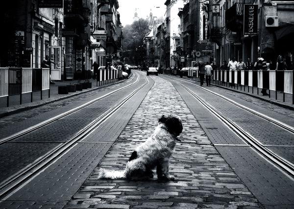 Umetnuta u tekst Svaki pas ima svoj dan