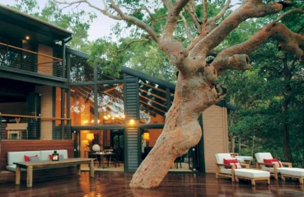 sydney beachhouse tree deck 665x431 Vikendica iz bajke