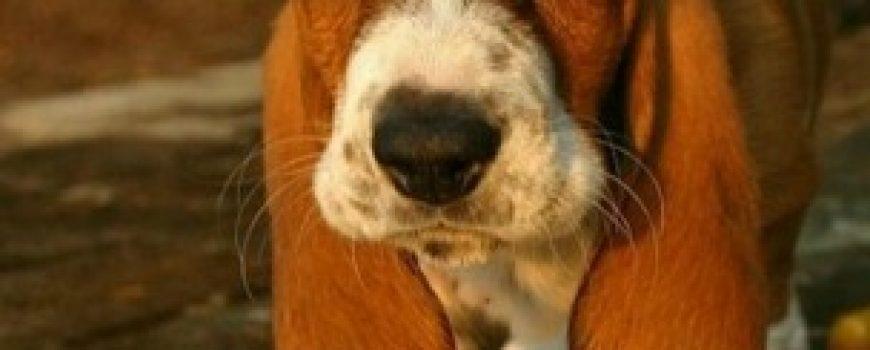 Ispovest jednog psa