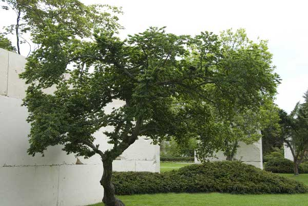Slika10 Muzej drveća