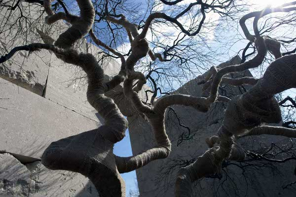 Slika32 Muzej drveća