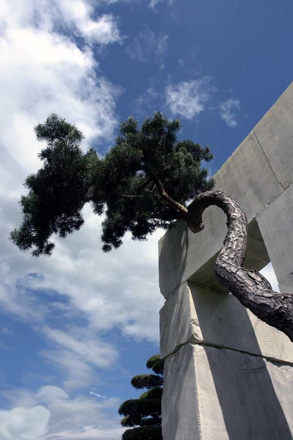 Slika51 Muzej drveća