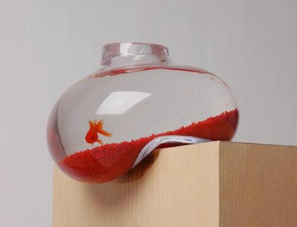 akvarijum7 Mače moje, kuče moje drago!