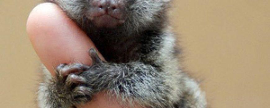 Top 5 najmanjih i najslađih životinja