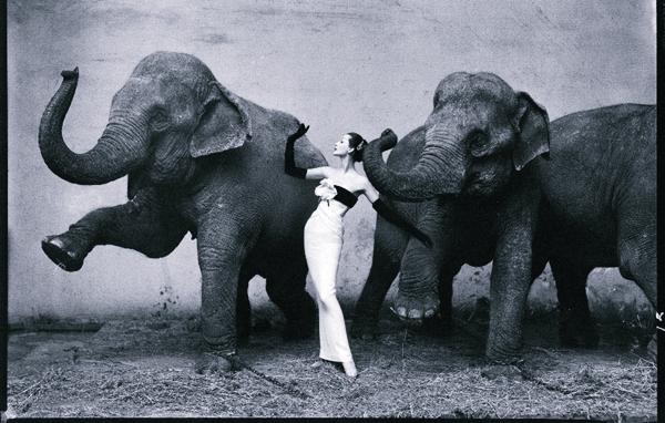 SLIKA 3 Dovima in an Evening Dress by Dior with Elephants of the Cirque dHiver Istorija modne fotografije: Prvi koraci