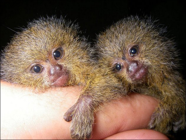 Slika112 Top 5 najmanjih i najslađih životinja