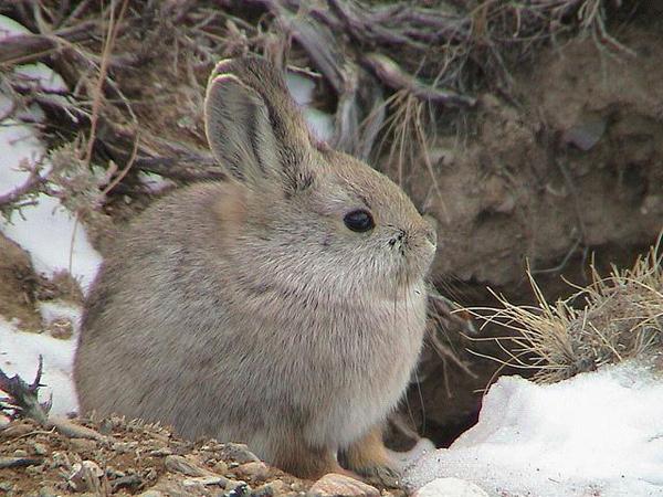 Slika23 Top 5 najmanjih i najslađih životinja
