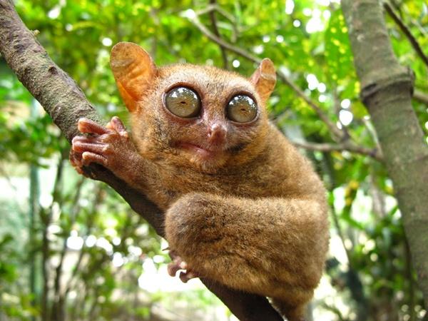 Slika33 Top 5 najmanjih i najslađih životinja