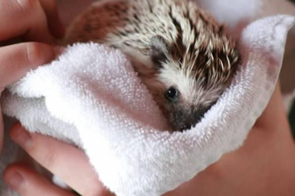 Slika43 Top 5 najmanjih i najslađih životinja