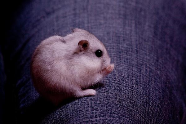 Slika55 Top 5 najmanjih i najslađih životinja