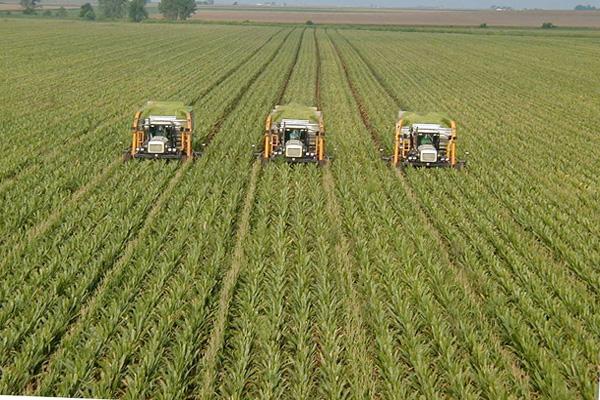250 U zemlji Amiša i kukuruznih polja