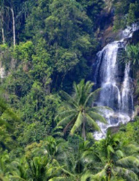Najveće i najlepše kišne šume na svetu