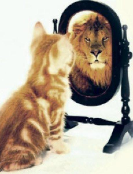 Jako samopouzdanje ili gubitak razuma?