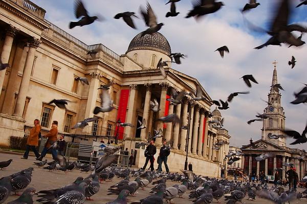 312 Trk na trg: Trafalgar Square, London