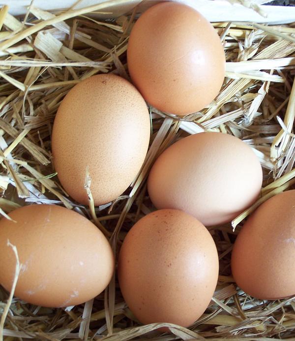 Jaja Hrana za mentalnu energiju i koncentraciju