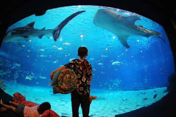 Slika 104 Top 10 najvećih akvarijuma na svetu
