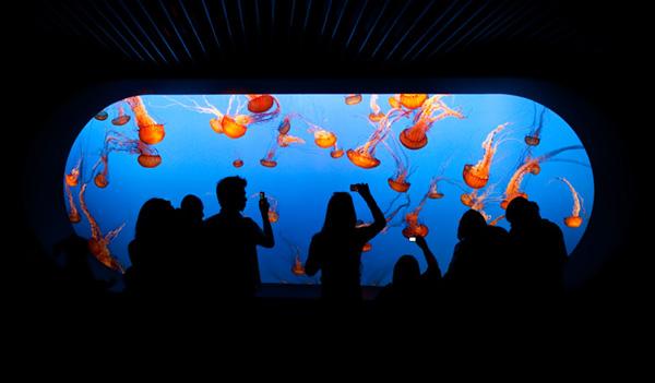 Slika 157 Top 10 najvećih akvarijuma na svetu