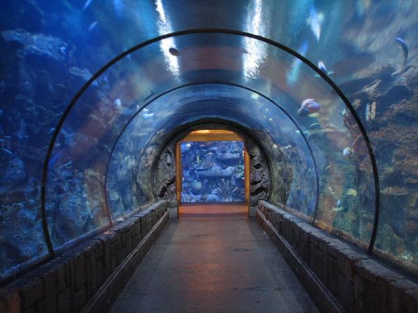 Slika 331 Top 10 najvećih akvarijuma na svetu