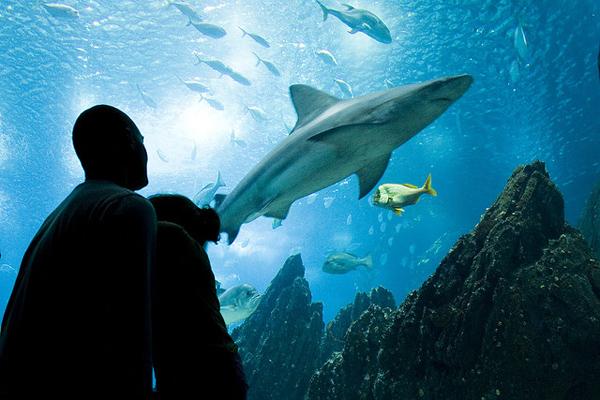 Slika 424 Top 10 najvećih akvarijuma na svetu