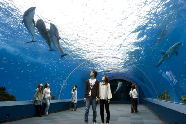 Slika 520 Top 10 najvećih akvarijuma na svetu