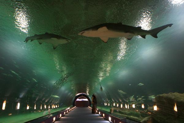 Slika 620 Top 10 najvećih akvarijuma na svetu