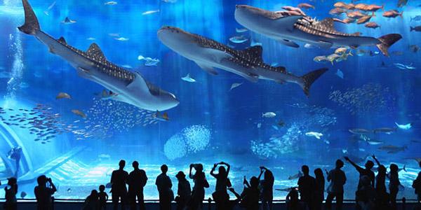 Slika 715 Top 10 najvećih akvarijuma na svetu