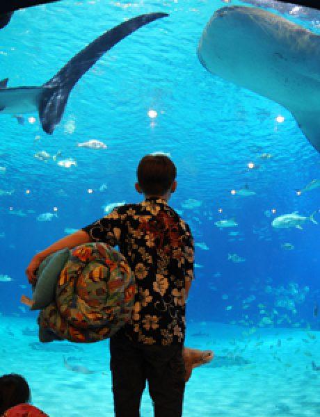 Top 10 najvećih akvarijuma na svetu