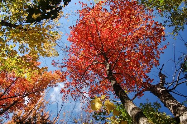 Slika 137 Stiže jesen: Kolektivno kukanje