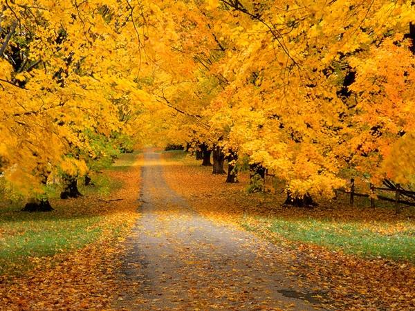 Slika 327 Stiže jesen: Kolektivno kukanje