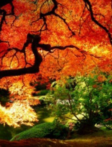 Citati o jeseni: Poslednji i najlepši osmeh godine