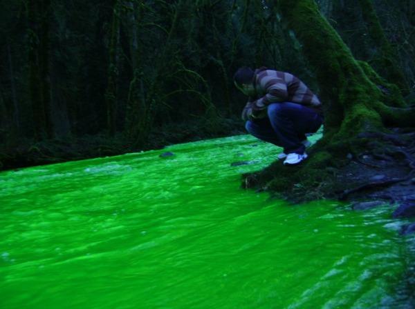 Slika 447 Čudo Kanade, neonska reka