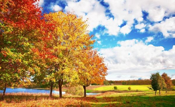 Slika 448 Citati o jeseni: Poslednji i najlepši osmeh godine