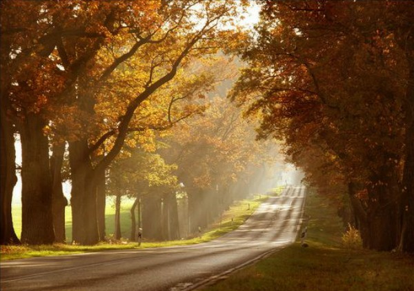 Slika 541 Citati o jeseni: Poslednji i najlepši osmeh godine